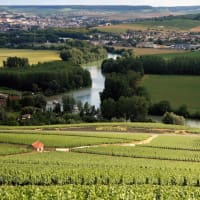 Day Trip to Champagne with a Wine Expert