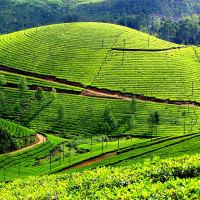 Private Day Tour - Kandy to Nuwara Eliya