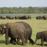 Enjoy wildlife, landscape  and culture in 2 days
