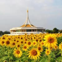 Enjoy the Evening to Night Trip Like A Local In Bangkok