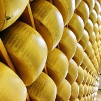 Cheesemaking Workshop with an Artisan