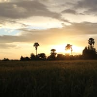 Sunset Dinner in the Paddy Fields!