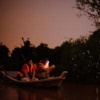 Mangrove, Seafood and Fireflies