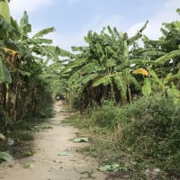 Hiking trail in Hanoi