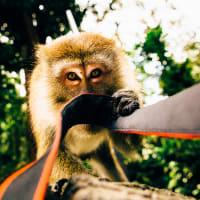 Batu Caves, Waterfalls & Hotsprings Tour