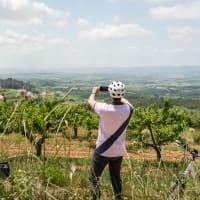 Bike Tour in the Cava Vineyards