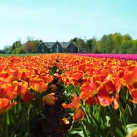 Discovering Dutch Flower Fields by Bike