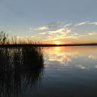 Unique Albufera Lake Experience