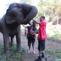 One Day Elephant Care and Bath