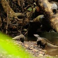 World Heritage Khao Yai Private Wildlife Tour