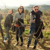 Wine Tasting Day Trip in the vinyards