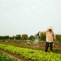 Farm tour and cook with local family in Hanoi