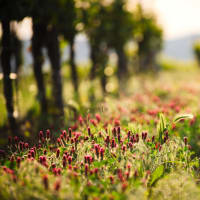 Private Day Trip to Chablis with a wine expert