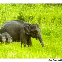 Khao Yai wildlife tour