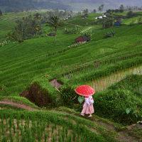 Trekking Jatiluwih rice terrace