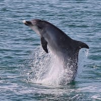 Full-day Private Dolphin Watching