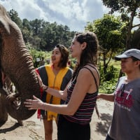 Chiang Mai's Elephants & Sticky Waterfall Day Trip