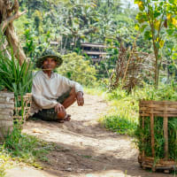 Best of Bali Day Trip: Highlights & Hidden Gems