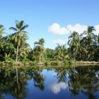 Kayak Workshop around Pulau Ubin