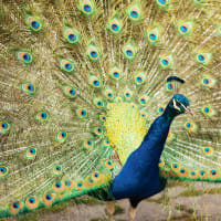 Stories, enchanting parks and magical birds