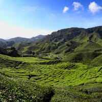 Day Trip to Cameron Highlands