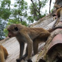 Kandy Round Trip