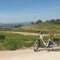 Cava bike tour in the vineyards