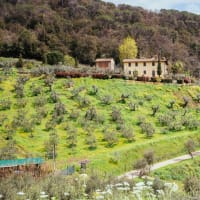 Tuscan Countryside: Horseback Riding & Local Villages