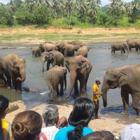 Elephant Orphanage - Pinnawala
