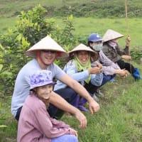 Wet rice planting tour