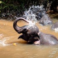 Bathe with an Elephant