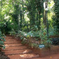 Sri Lanka private tour to Herbal Garden