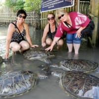 Interaction with Turtle at Turtle Island