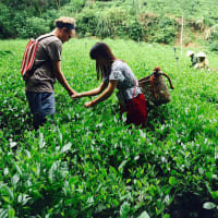 An extraordinary journey to the tea growing province