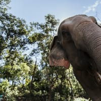 Chiang Mai's Elephants & Sticky Waterfall Day Trip
