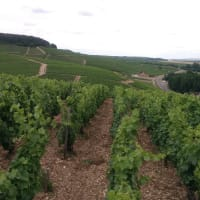 P rivate Day Trip to Chablis with a wine expert