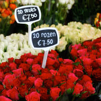 2-Day Essentials of Amsterdam Tour