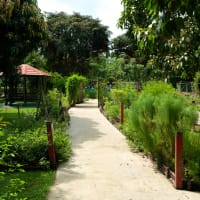 Pasir Ris Nature Walking Tour