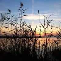 Day Trip: Albufera Lake Experience