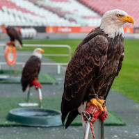 Little Football Fan at Benfica Stadium