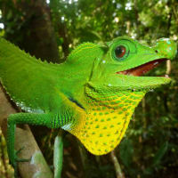 1 Day Tour ** Singharaja Rainforest