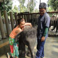 Swim with an Elephant