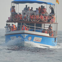 Whale & Dolphin watching...