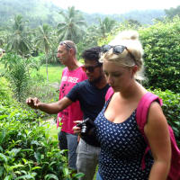 Inside Galle Tour a Tea Factory & a Waterfall