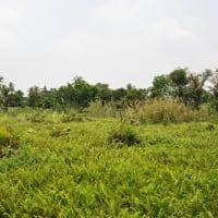 Biking getaway in Koh Kret