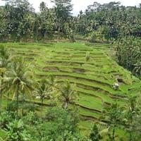 Bali Best Sights - Customized Tour