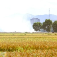 Harvest Rice with Farmers