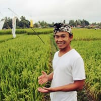 Be Bali Day