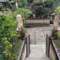 Ubad Ubud Bali Spiritual Healer