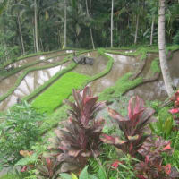 Bali Local Tours